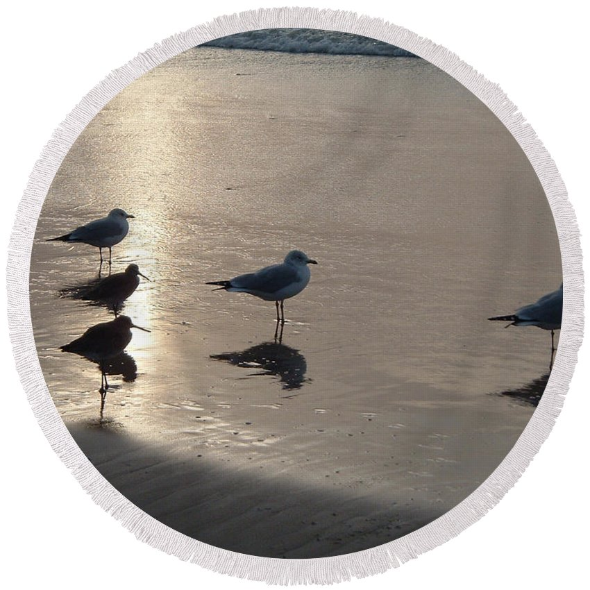 Seascape Beach Imperial San Diego Sandpipers Seagulls Birds Wildlife Nature Round Beach Towel featuring the photograph Sandpipers And Seagulls by Brenda Salamone