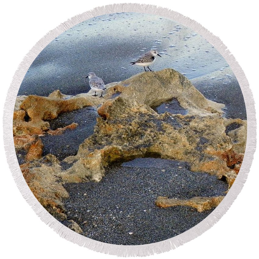 Sandpipers Round Beach Towel featuring the photograph Sandpipers 1 by Joe Wyman