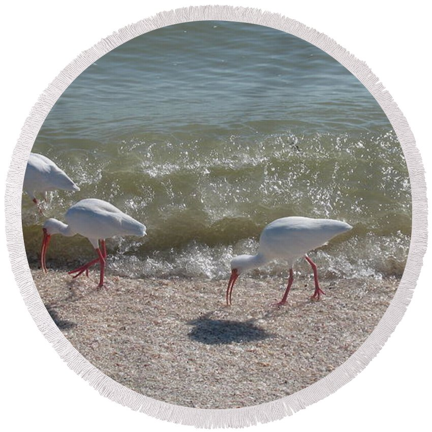 Ibis Round Beach Towel featuring the photograph Sanibel Ibis by Christiane Schulze Art And Photography