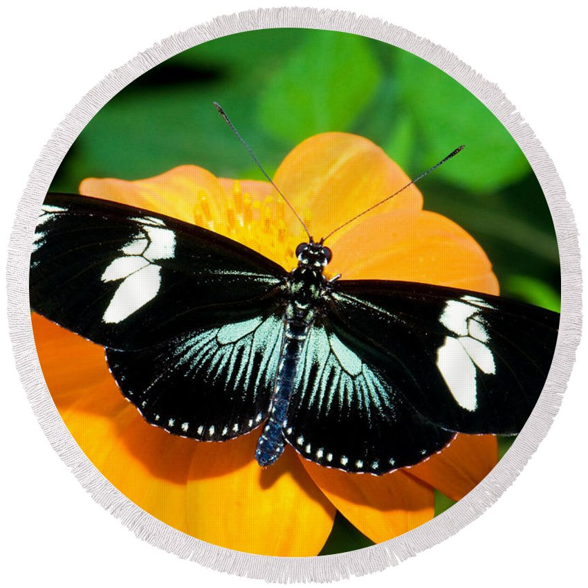 Animal Round Beach Towel featuring the photograph Sara Longwing Butterfly by Millard H. Sharp