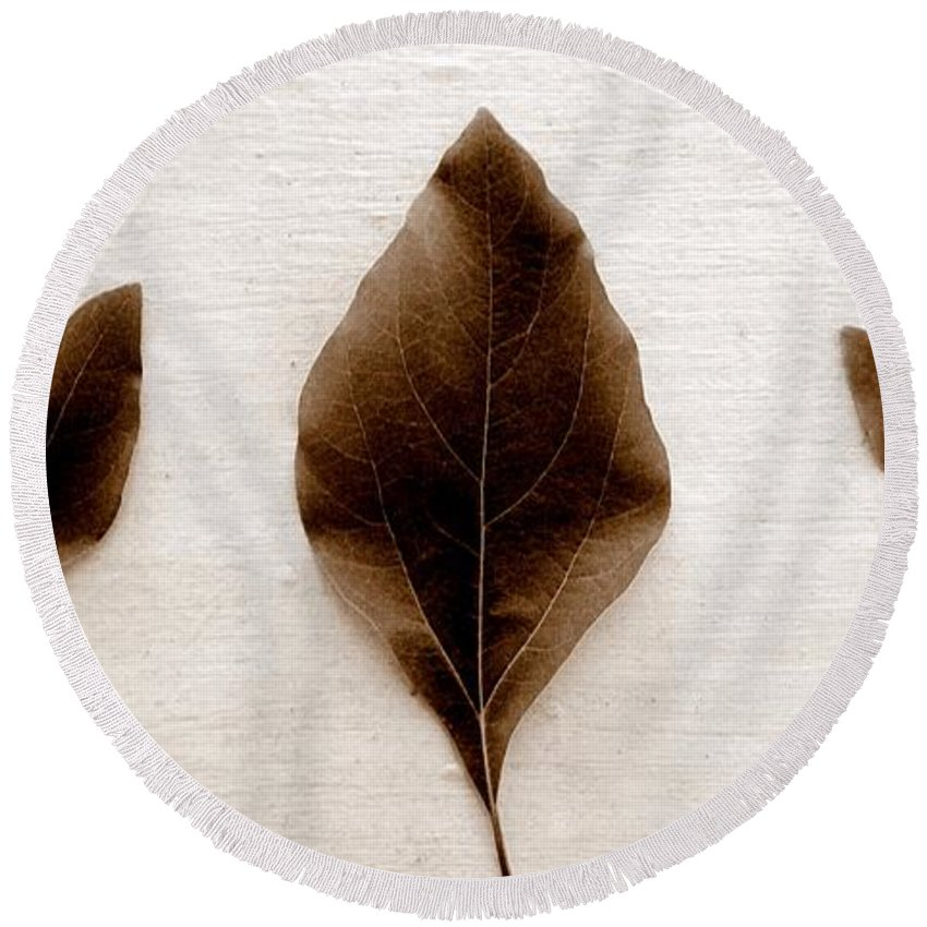 Sassafras Leaf Round Beach Towel featuring the photograph Sassafras Leaves In Sepia by Michelle Calkins