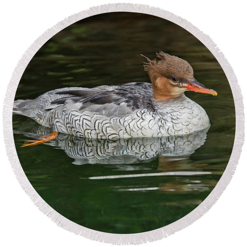 Anatidae Round Beach Towel featuring the photograph Scaly-sided Merganser Female by Anthony Mercieca