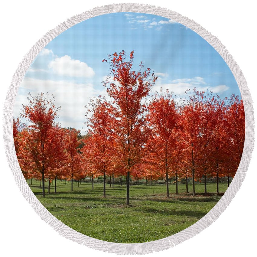Tree Round Beach Towel featuring the photograph Scarlet Formation by Barbara McMahon