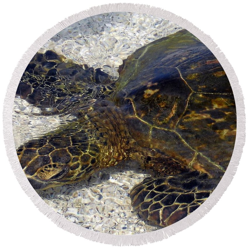 Turtle Round Beach Towel featuring the photograph Sea Life by Athala Carole Bruckner
