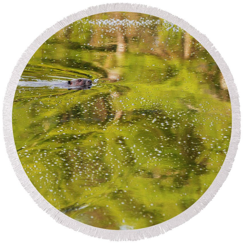 Green Round Beach Towel featuring the photograph Sea Of Green by Bill Wakeley