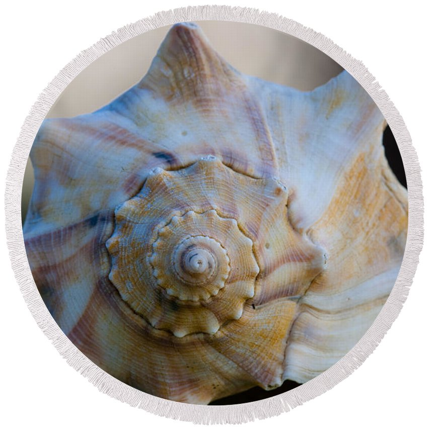Sea Shell Round Beach Towel featuring the photograph Sea Shell by Dale Powell