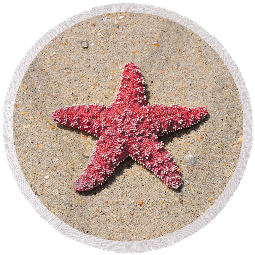 Sea Star Round Beach Towel featuring the photograph Sea Star - Red by Al Powell Photography USA