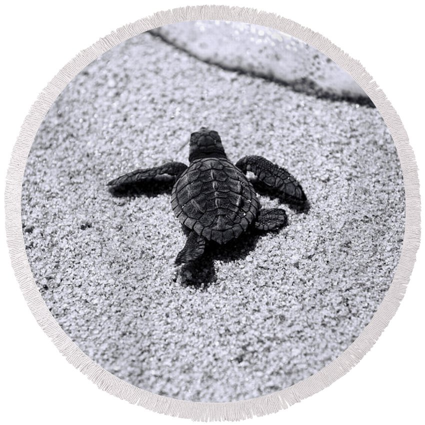 Baby Loggerhead Round Beach Towel featuring the photograph Sea Turtle by Sebastian Musial