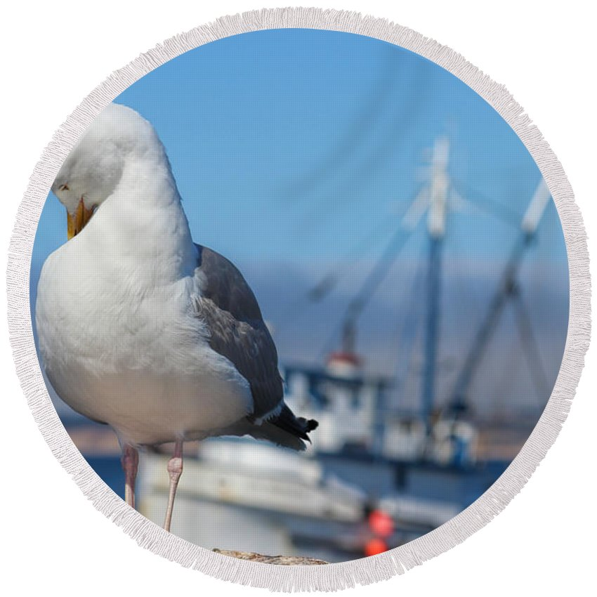 Seagull Round Beach Towel featuring the photograph Seagull 3 by Becca Buecher