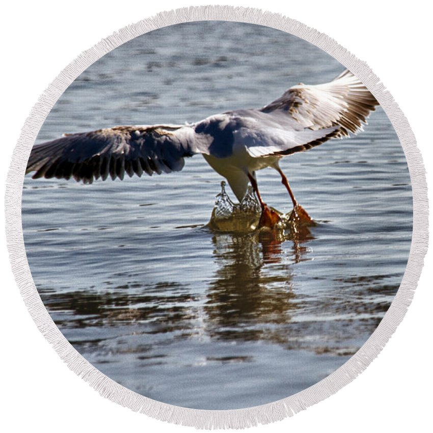 Air Round Beach Towel featuring the photograph Seagull by Stelios Kleanthous