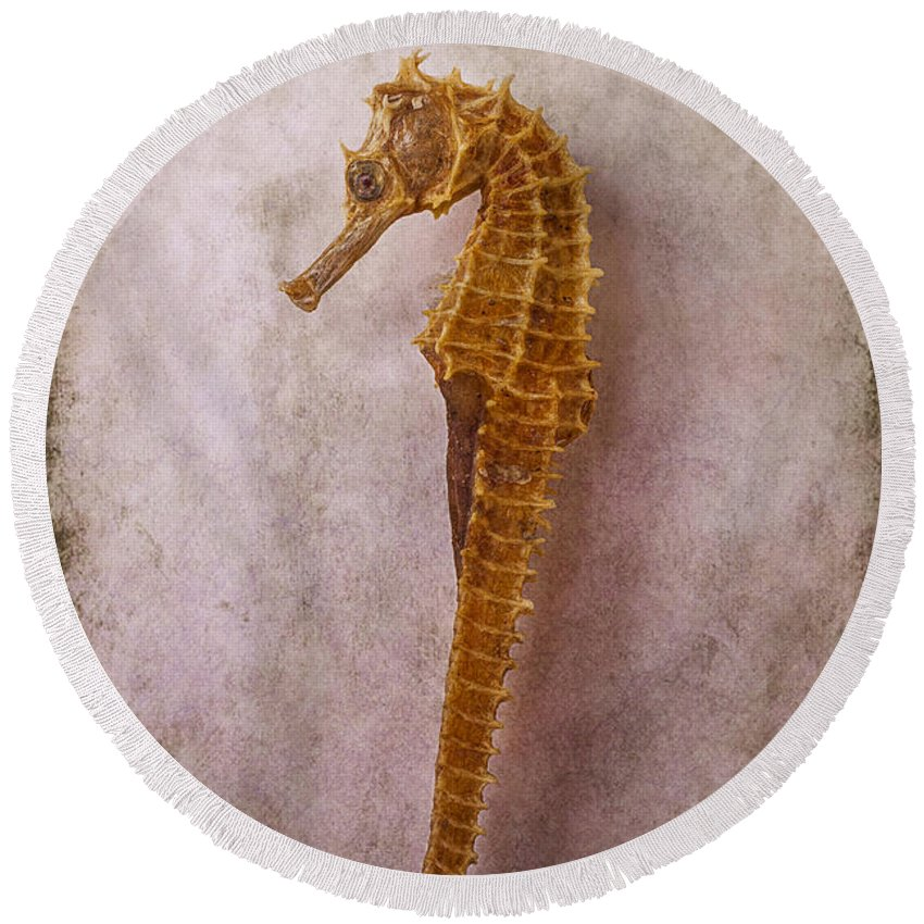 Seahorses Round Beach Towel featuring the photograph Seahorse Still Life by Garry Gay