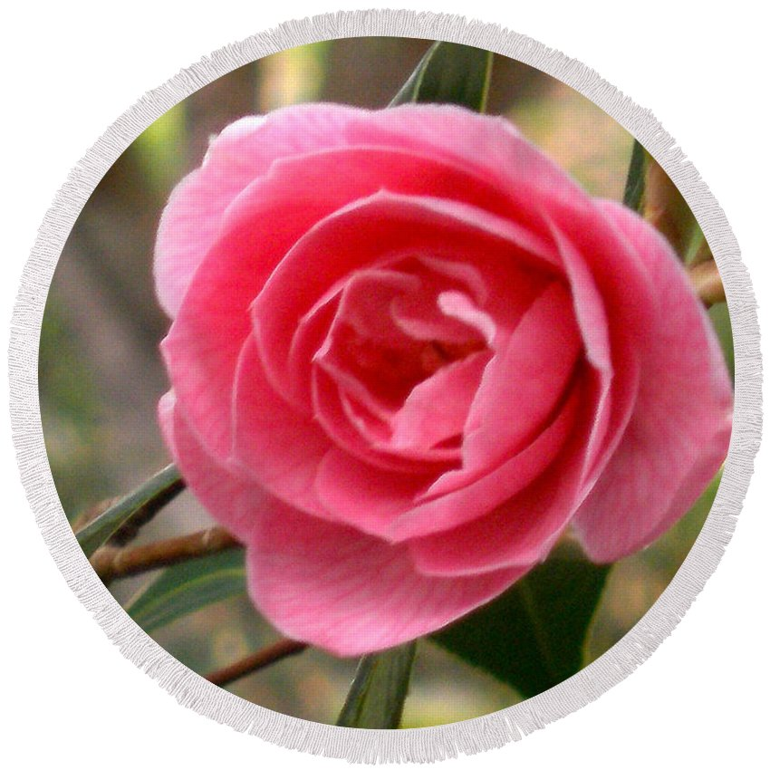 Pink Rose Prints Round Beach Towel featuring the photograph Seattle Rose by Kristina Deane