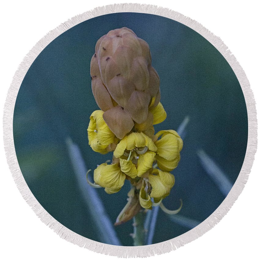 Yellow Round Beach Towel featuring the photograph Seeds by Douglas Barnard