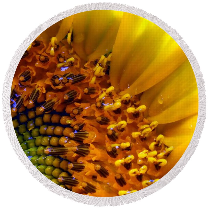 Yellow Round Beach Towel featuring the photograph Seeds Of Sunshine by Karen Wiles