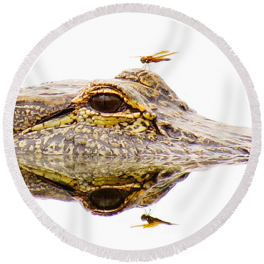 Gator Round Beach Towel featuring the photograph Seeing Double by To-Tam Gerwe