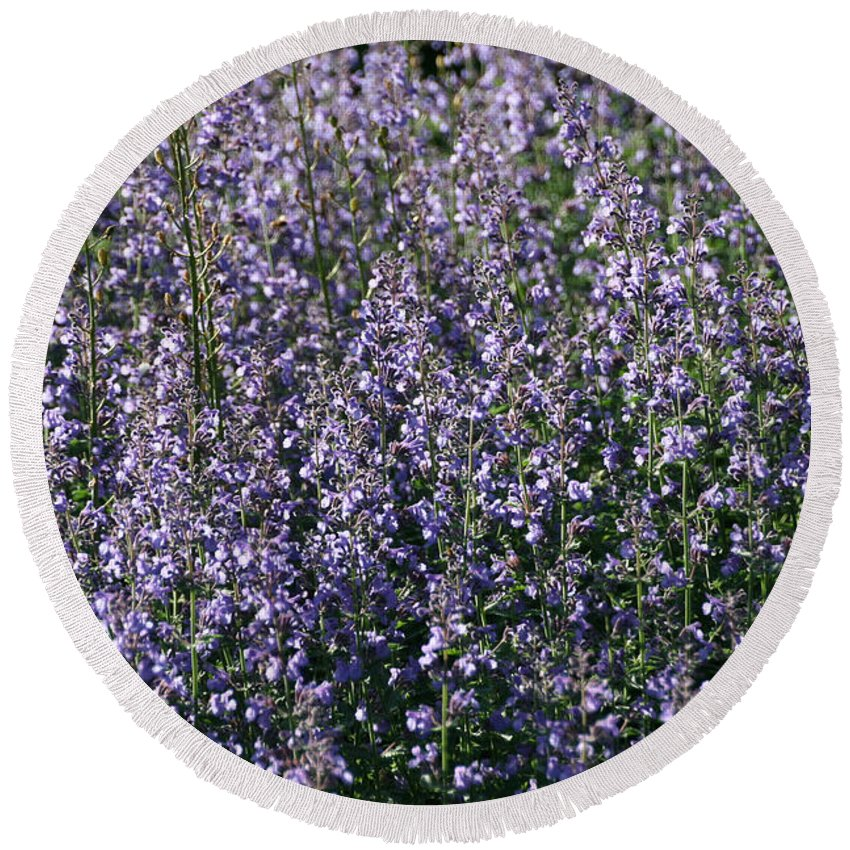 Flower Round Beach Towel featuring the photograph Seeing Lavender by Susan Herber