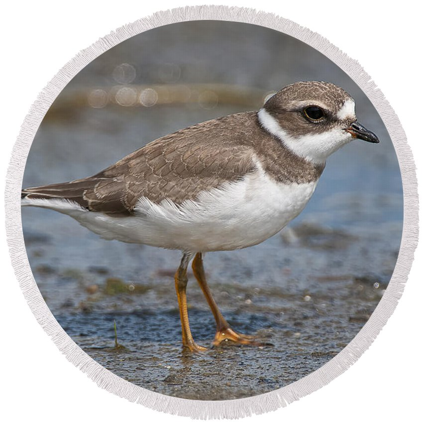 Semi-palmated Plover Round Beach Towel featuring the photograph Semi-palmated Plover Pictures 59 by World Wildlife Photography