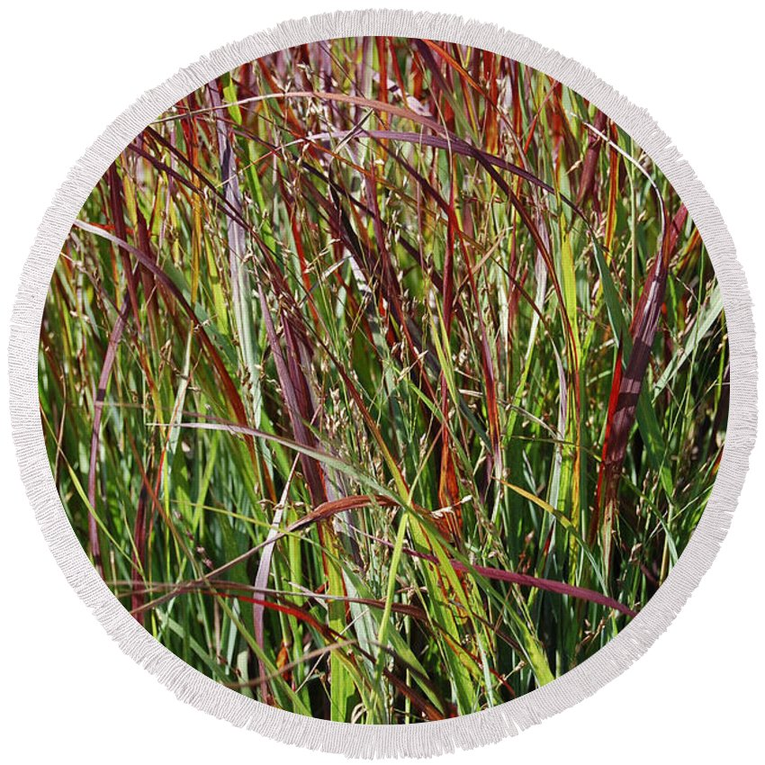 First Star Art Round Beach Towel featuring the photograph September Grasses By Jrr by First Star Art