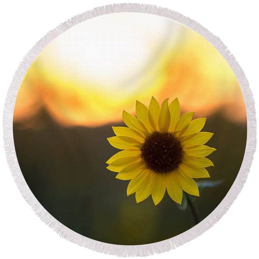 California Round Beach Towel featuring the photograph Setting Sun Flower by Peter Tellone