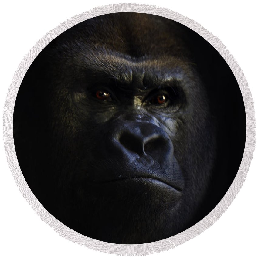 Primates Round Beach Towel featuring the photograph Shadow Series Five by Ken Frischkorn