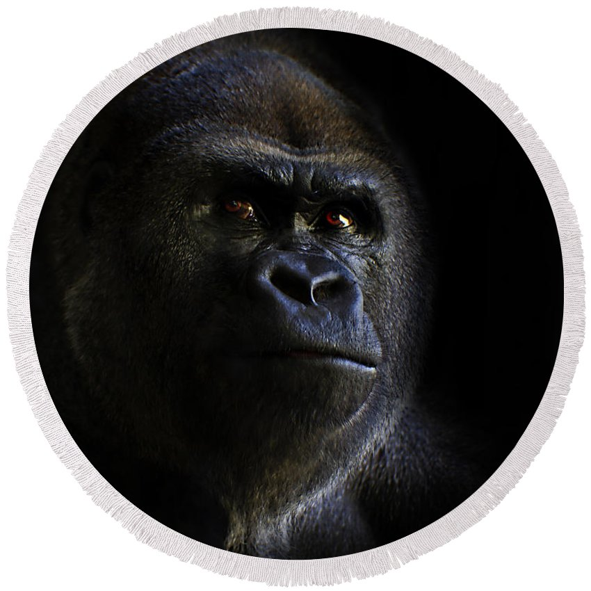 Primates Round Beach Towel featuring the photograph Shadow Series Four by Ken Frischkorn