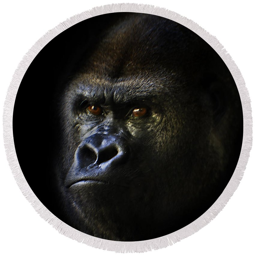 Primates Round Beach Towel featuring the photograph Shadow Series Two by Ken Frischkorn