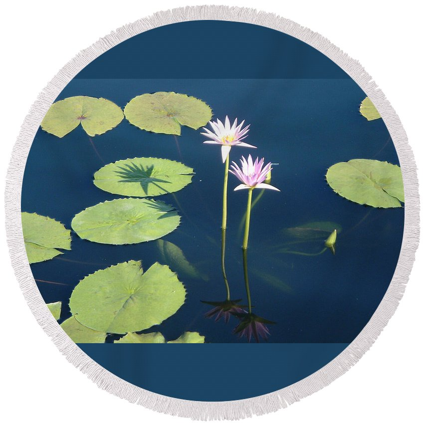 Lotus Waterlily Lilypad Water Pond Nature Flowers Shadow Round Beach Towel featuring the photograph Shadows And Reflections by Brenda Salamone