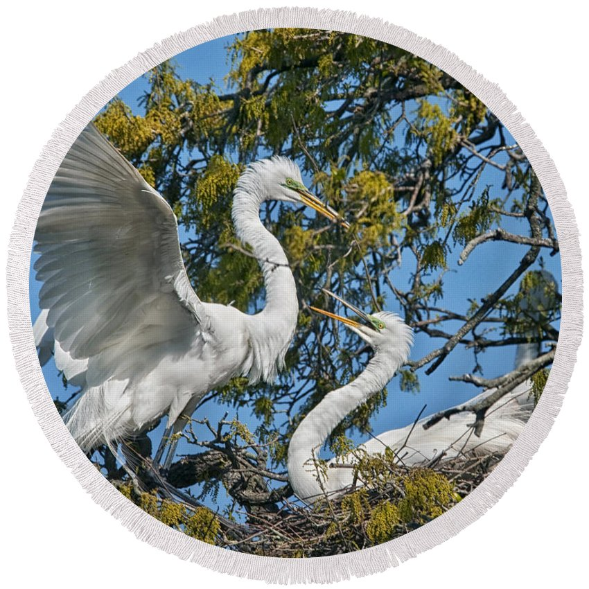 Round Beach Towel featuring the photograph Sharing The Nest by Claudia Kuhn