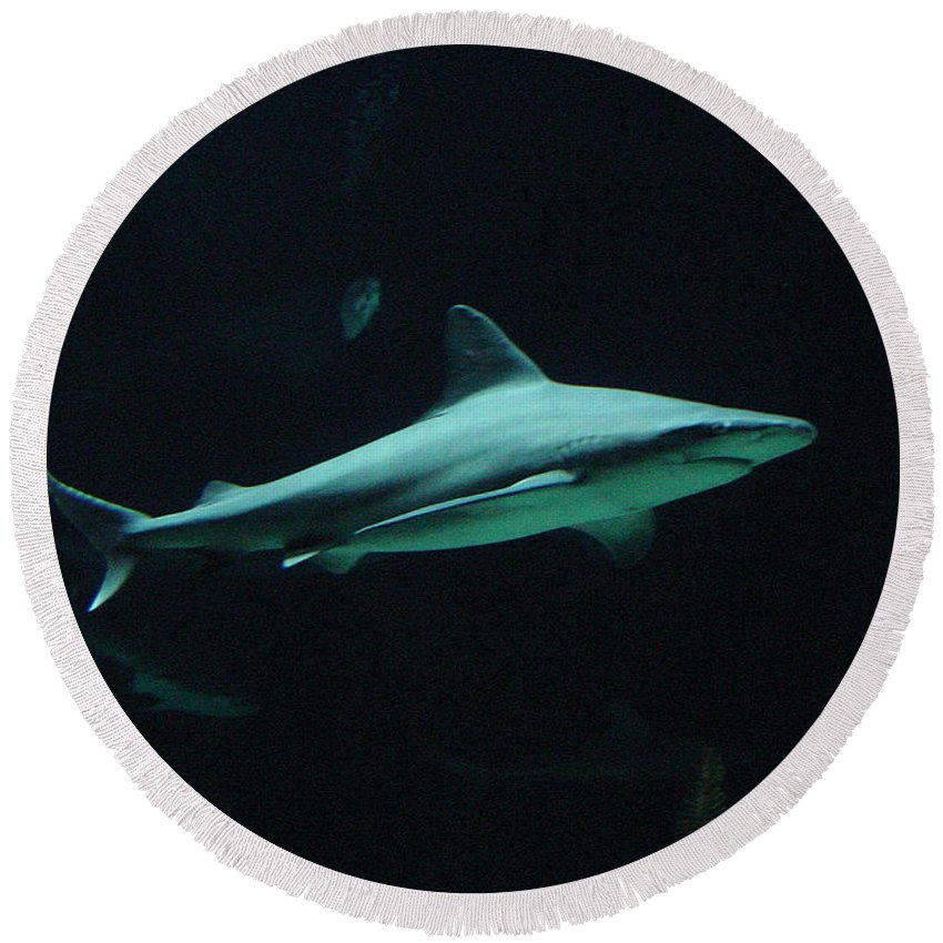 Shark Round Beach Towel featuring the photograph Shark-09451 by Gary Gingrich Galleries