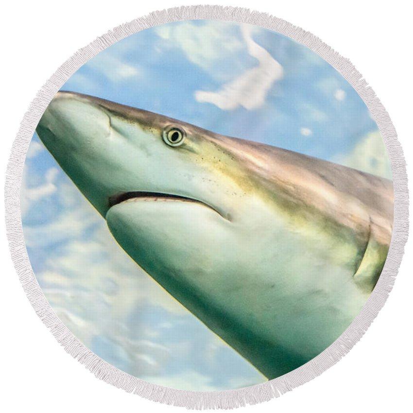 Shark Week Round Beach Towel featuring the photograph Shark Profile by Cheryl Baxter