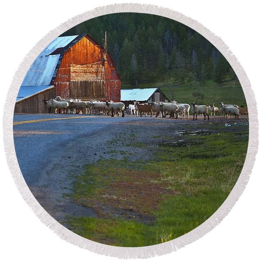 Red Barn Round Beach Towel featuring the photograph Sheep Crossing by Theresa Tahara