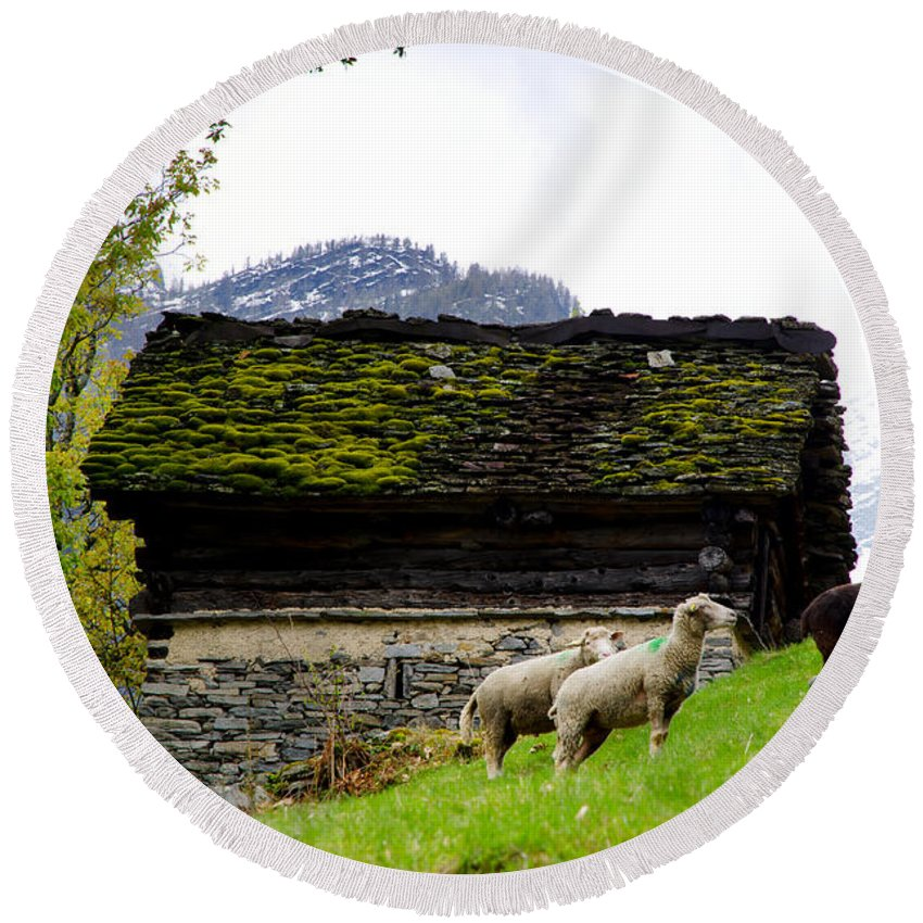 Sheep Round Beach Towel featuring the photograph Sheeps And Rustic House by Mats Silvan