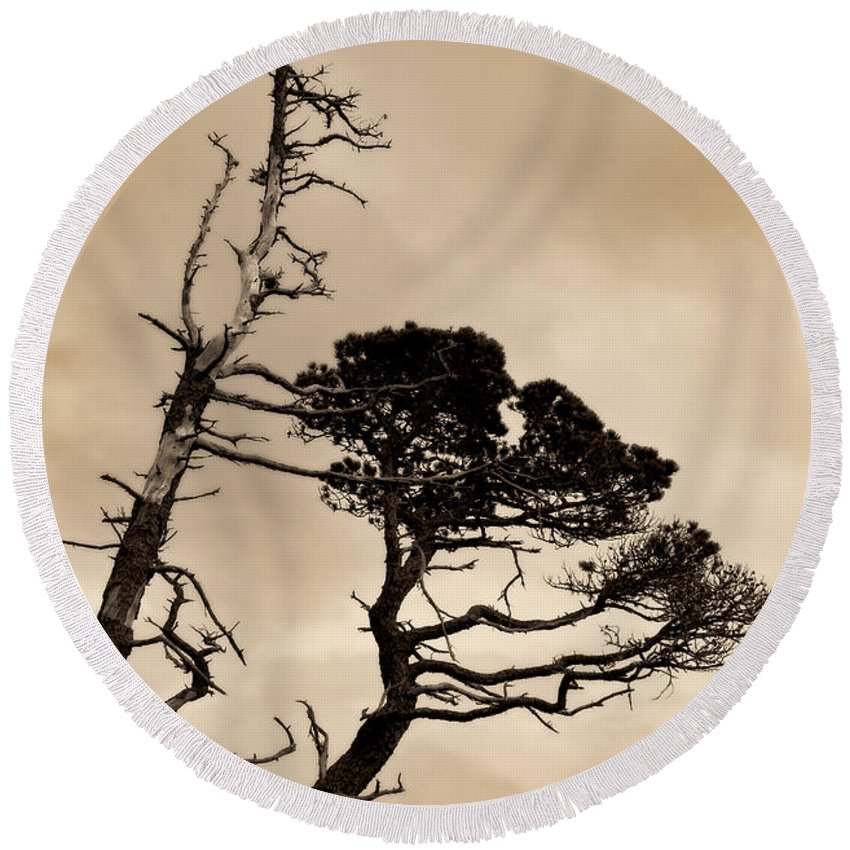 Nature Round Beach Towel featuring the photograph Shoreline Struggle by Venetta Archer