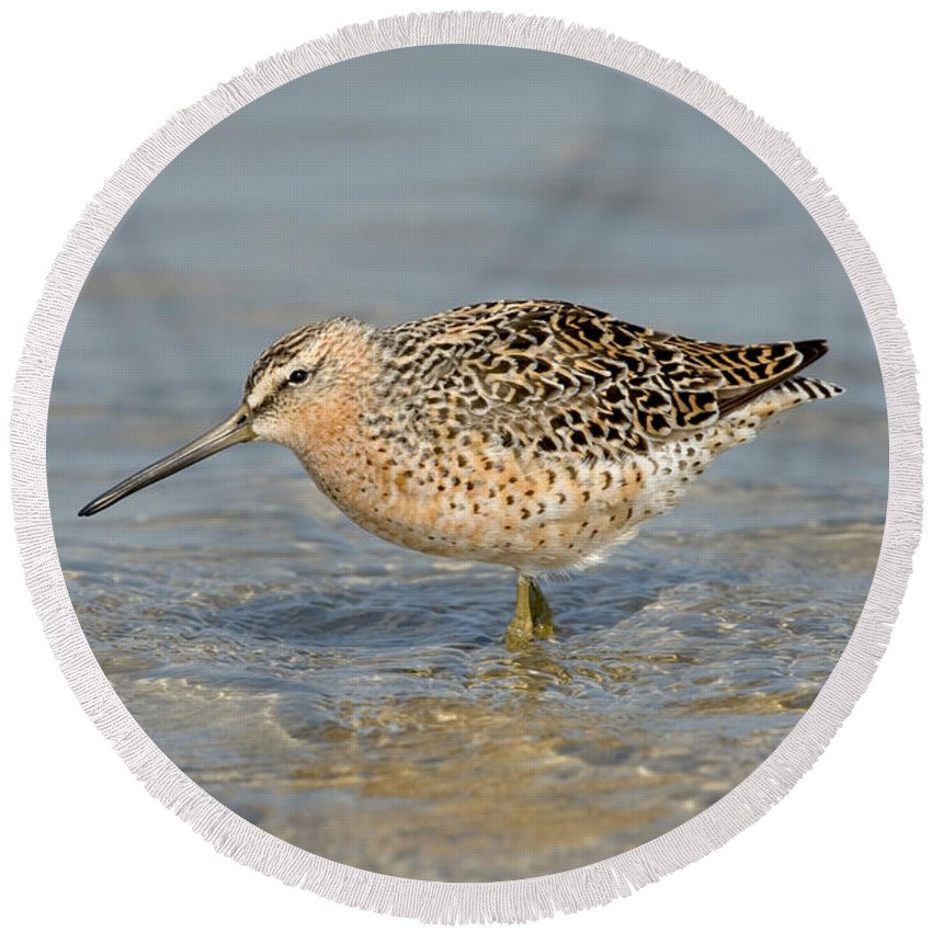Animal Round Beach Towel featuring the photograph Short-billed Dowitcher, Breeding by Anthony Mercieca
