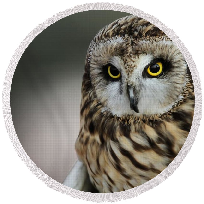 Short Eared Owl Portrait Round Beach Towel featuring the photograph Short Eared Owl Portrait by Dan Sproul