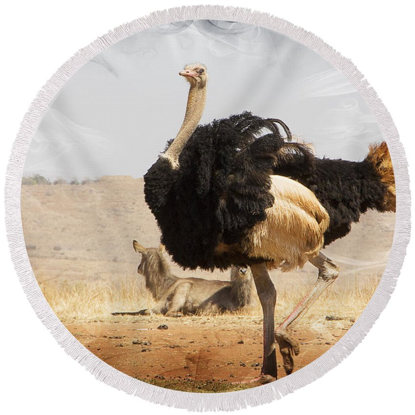 Ostrich Round Beach Towel featuring the photograph Show-off Modern by Douglas Barnard