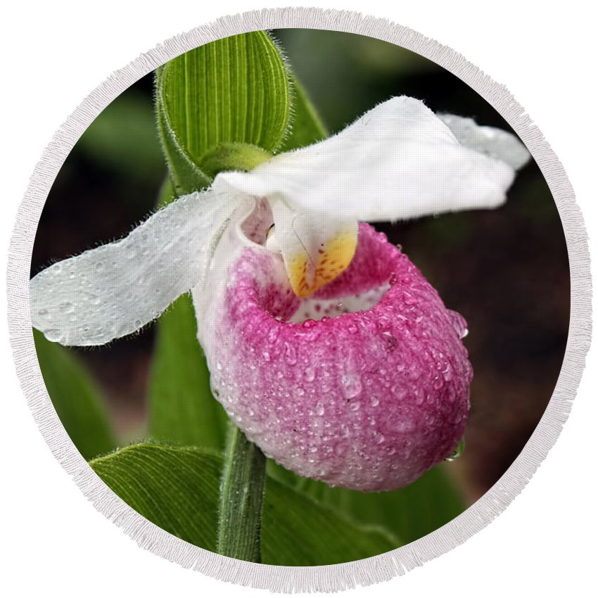 Wildflower Round Beach Towel featuring the photograph Showy Lady's Slipper by Teresa Zieba