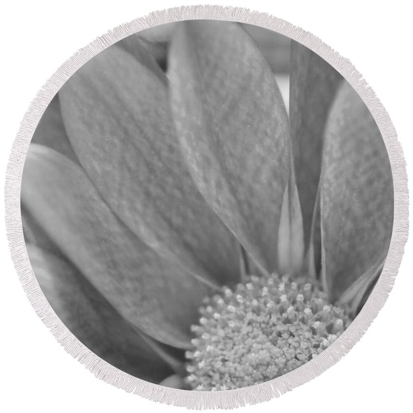 New Growth Round Beach Towel featuring the photograph Shy Grey by Robin Lewis