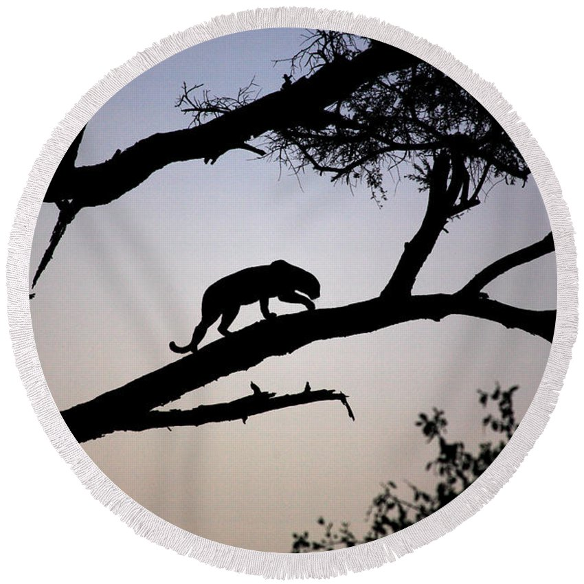 Africa Round Beach Towel featuring the photograph Silhouetted Leopard by Deborah Benbrook