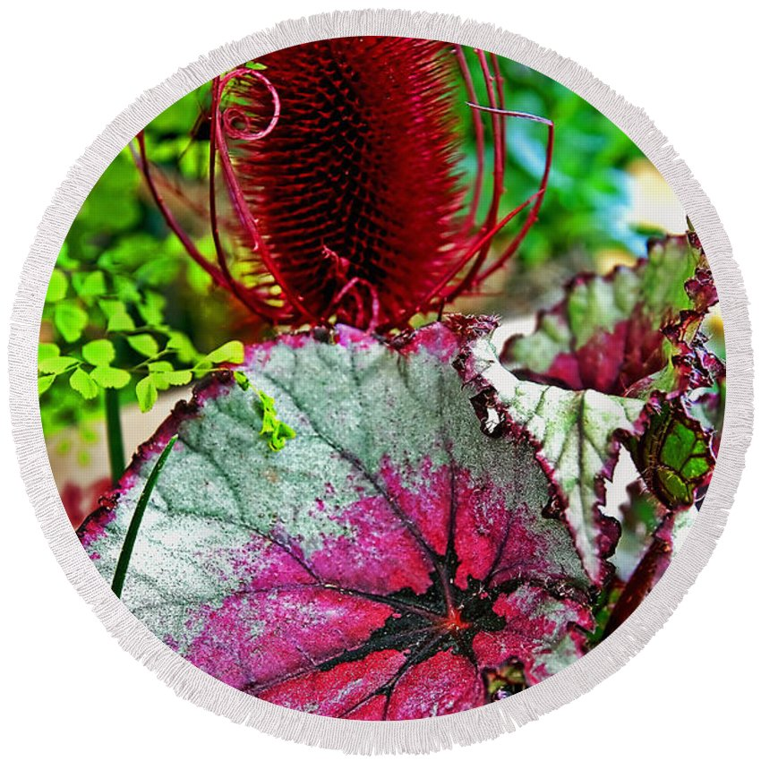Rex Begonia Round Beach Towel featuring the photograph Silver Edged Rex Begonia Plant Art Prints by Valerie Garner