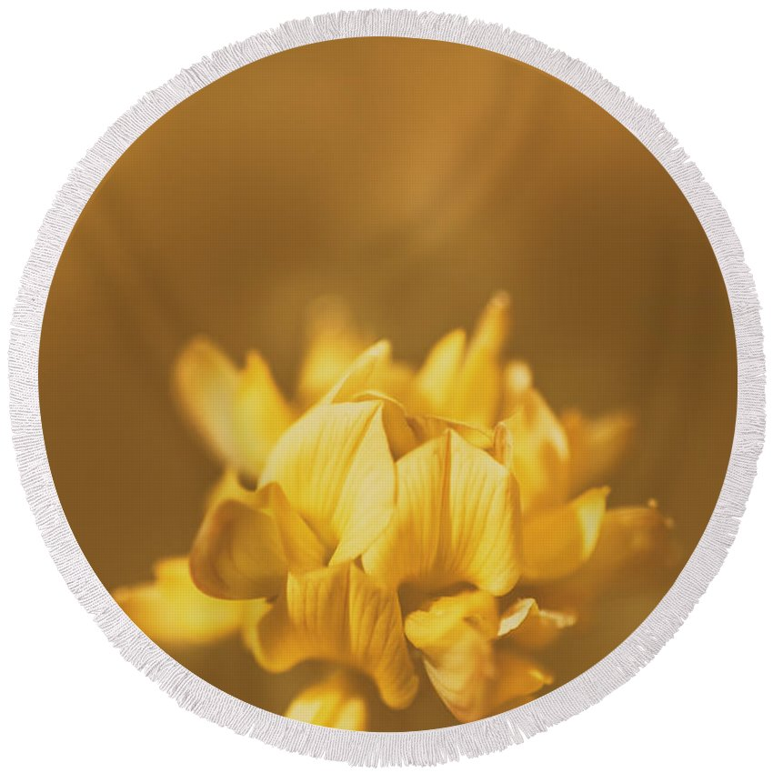 Clover Round Beach Towel featuring the photograph Simplistic Yellow Clover Flower by Jorgo Photography - Wall Art Gallery