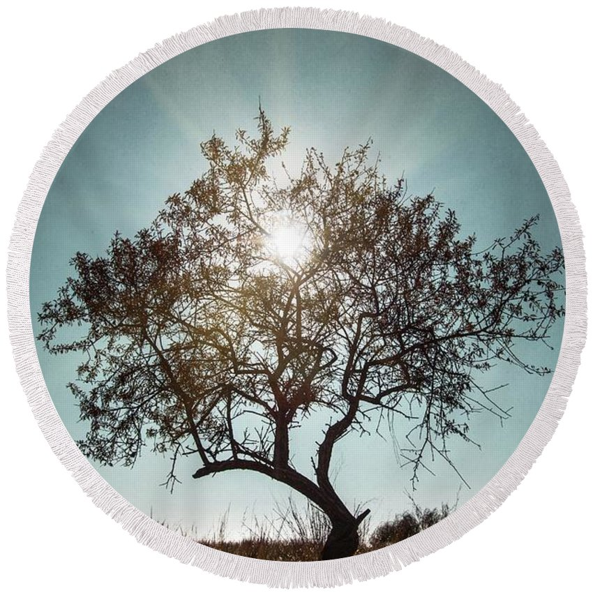 Dark Round Beach Towel featuring the photograph Single Tree by Carlos Caetano