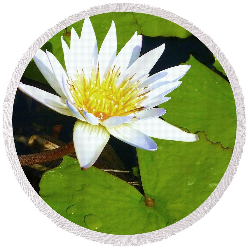 Lily Round Beach Towel featuring the photograph Single White Water Lily by Stephanie Callsen