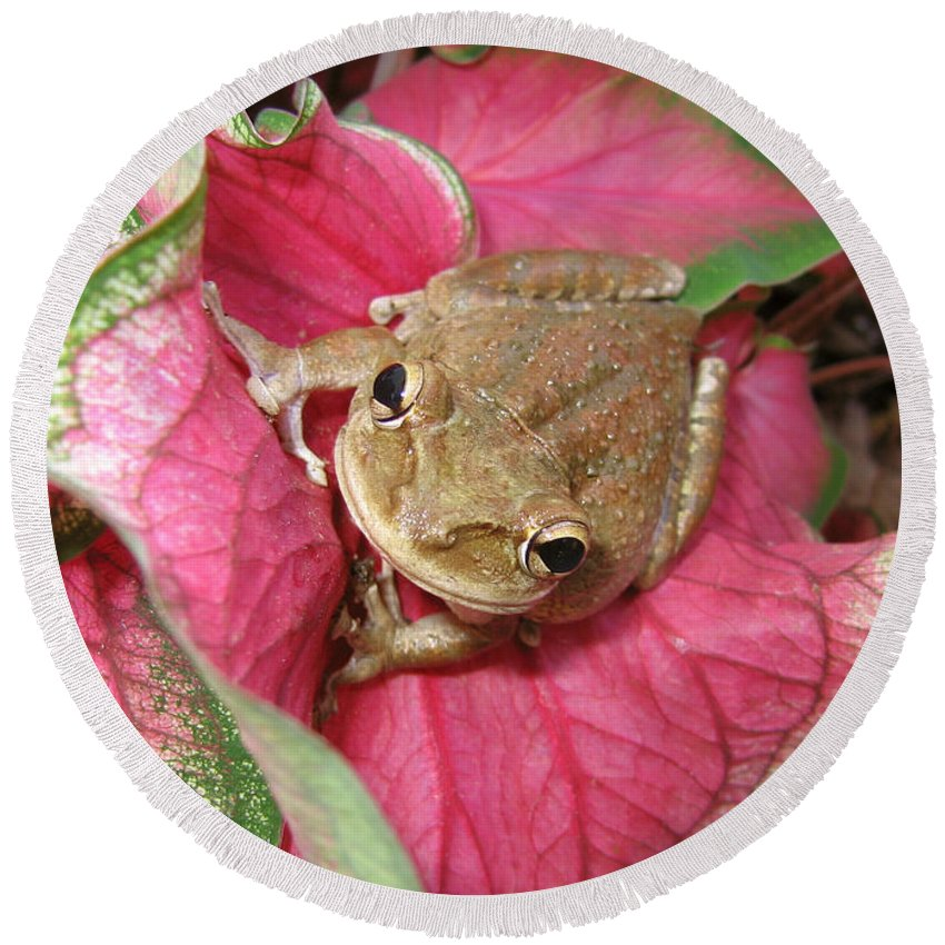 Frog Round Beach Towel featuring the photograph Pretty In Pink by Marcus Jones