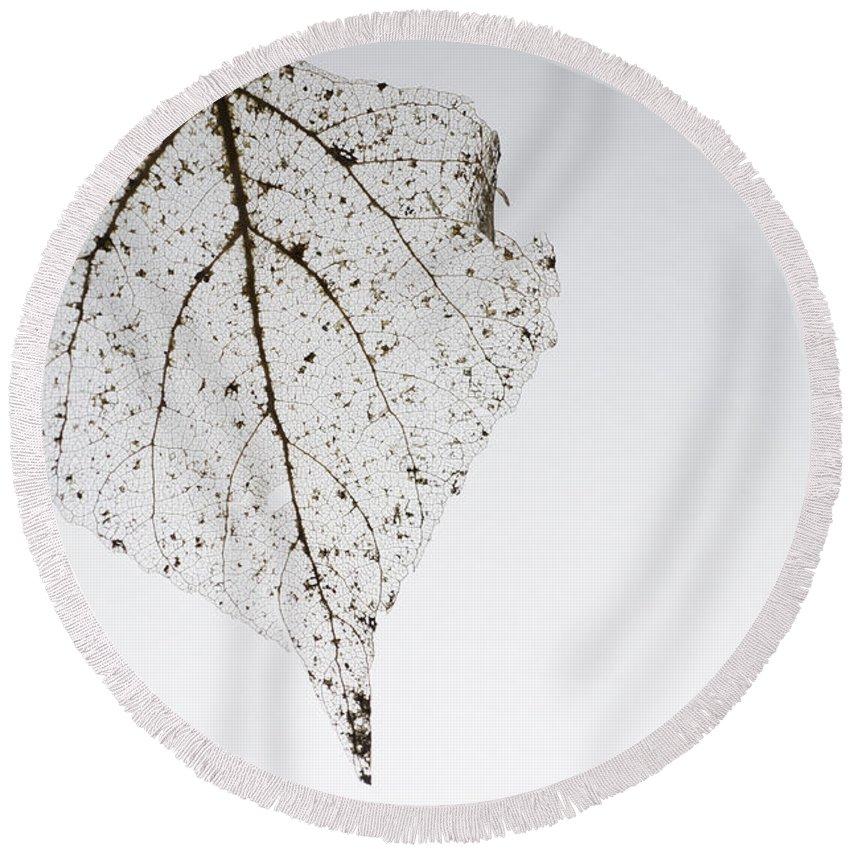 Leaf Round Beach Towel featuring the photograph Skeleton Leaf by Mats Silvan
