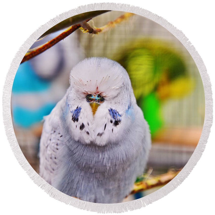 Travel Round Beach Towel featuring the photograph Sleeping Budgie by Elvis Vaughn