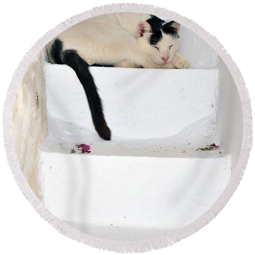 Serifos; Chora; Hora; City; Town; Greece; Greek; Hellas; Cyclades; Island; Kyklades; Aegean; Islands; Holidays; Vacation; Travel; Trip; Voyage; Journey; Tourism; Cats; Touristic; Summer; White; Steps; Stairway; Cat Round Beach Towel featuring the photograph Sleeping Cat In Serifos Town by George Atsametakis