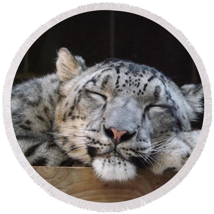 Sleeping Round Beach Towel featuring the photograph Sleeping Snow Leopard by Caryl J Bohn