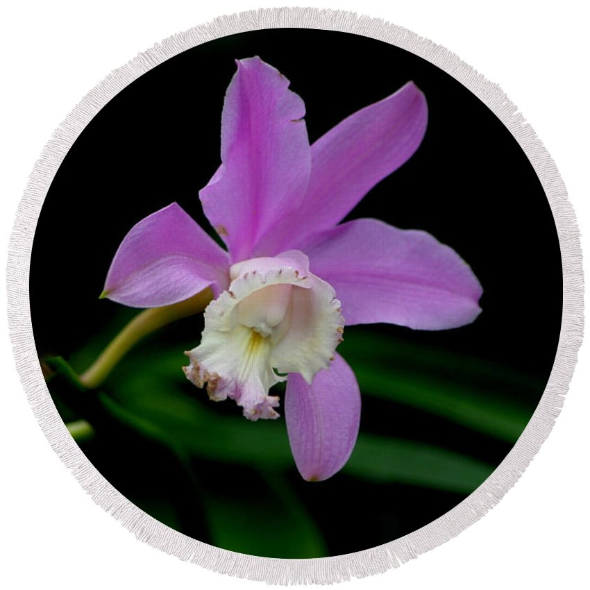 Orchid Round Beach Towel featuring the photograph Slowly Aging by Living Color Photography Lorraine Lynch