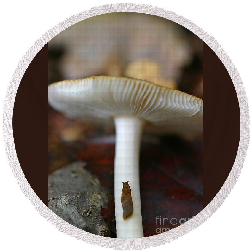 Mushroom Round Beach Towel featuring the photograph Slugs And Mushrooms by David Rucker